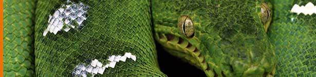 securite-python